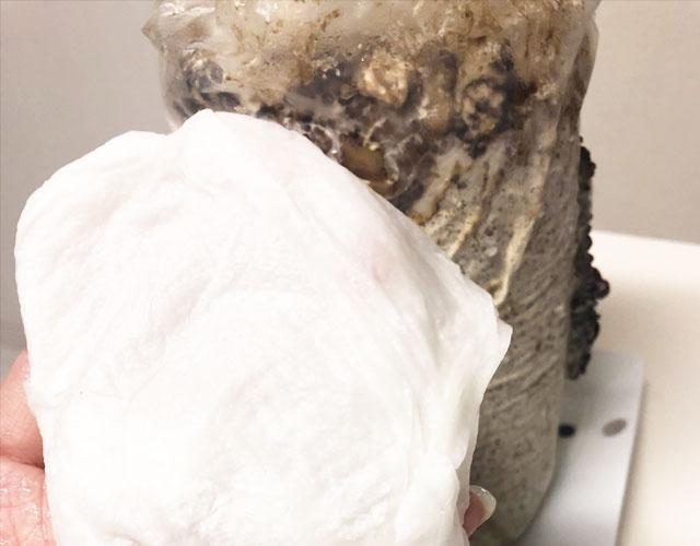 きくらげ栽培キット乾燥した時の対処法1