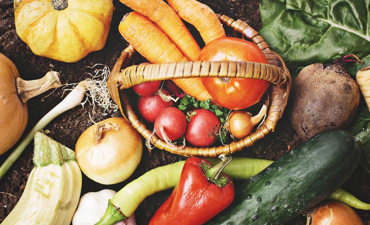 きくらげ栽培と食育 野菜の画像