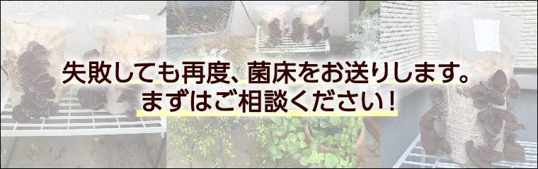 栽培キットできくらげを育てている写真