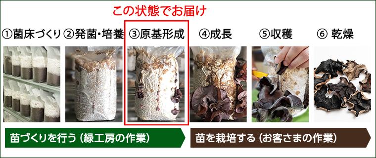 野菜栽培ときくらげ栽培の工程の比較