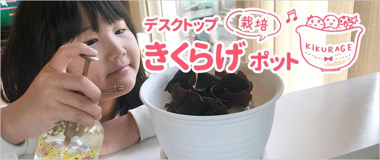 鳥取県・緑工房の純国産きくらげ入り麻婆春雨鍋