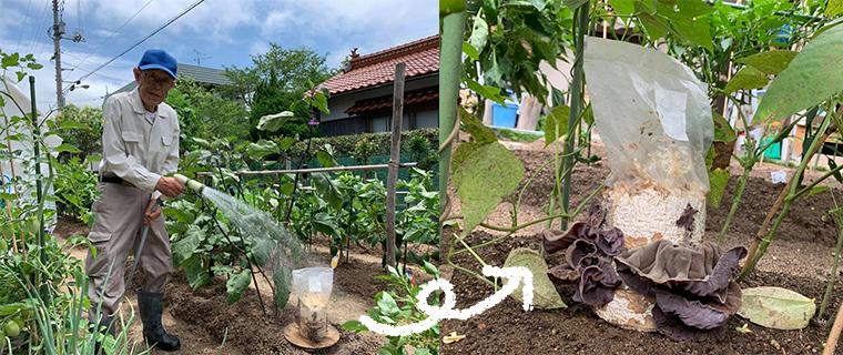きくらげ栽培キットを購入していただいたお客様、畑で育てておられます
