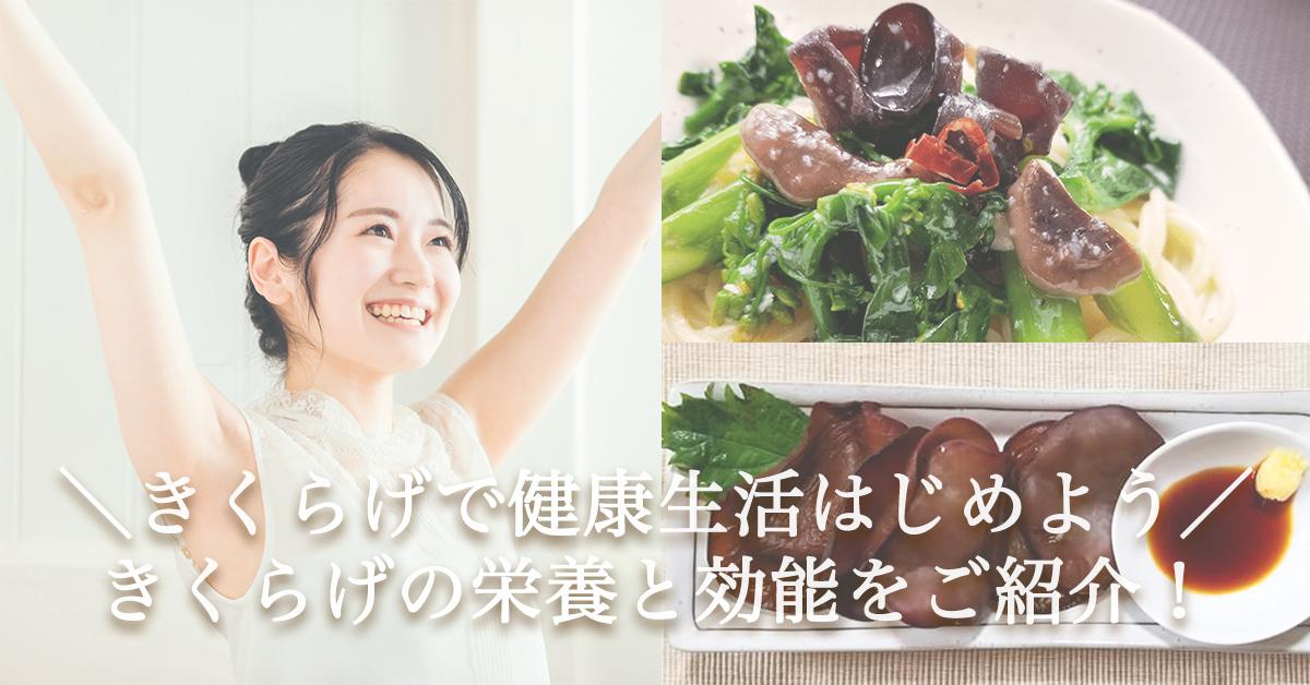 \きくらげで健康生活はじめよう/美容&健康にうれしい「きくらげ」の栄養と効能をご紹介!