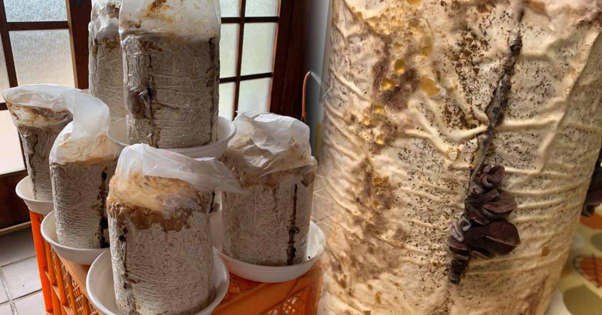 きくらげ栽培に使用した菌床