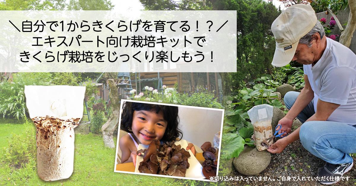 自分で1からきくらげを育てる!? エキスパート向け栽培キットできくらげ栽培をじっくり楽しもう! お皿に乗ったきくらげをもつ小学生の女の子ときくらげを収穫するおじいちゃん